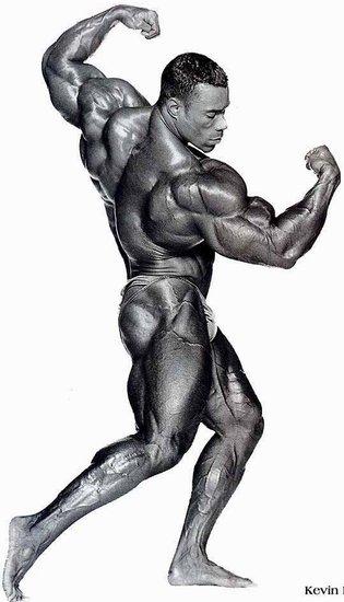 http://www.fitnesspont.hu/mass-shop/picture_gallery/Kevin_Levrone/Levrone_09.jpg